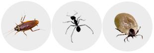 바퀴벌레사진
